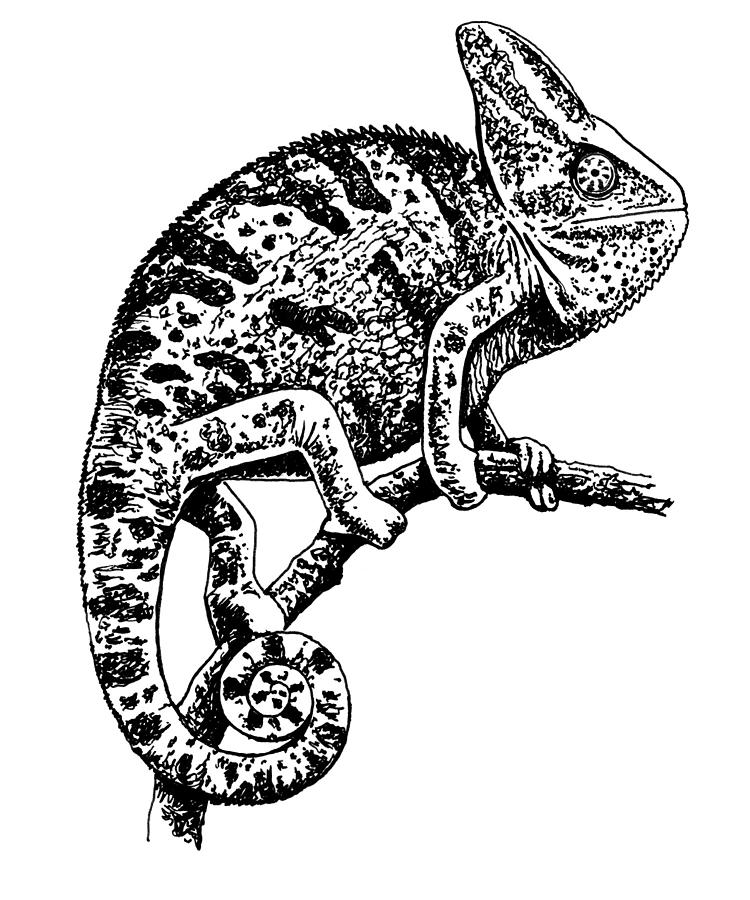 how to draw a chameleon learning how to draw a chameleon step by step chameleon to draw how a