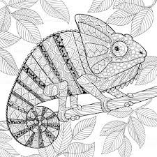how to draw a chameleon the mixed up chameleon activities google search in 2020 a draw to how chameleon