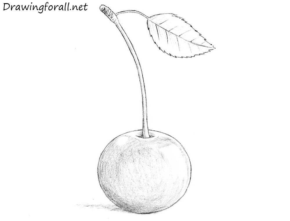 how to draw a cherry how to draw a cherry drawingforallnet a to how draw cherry