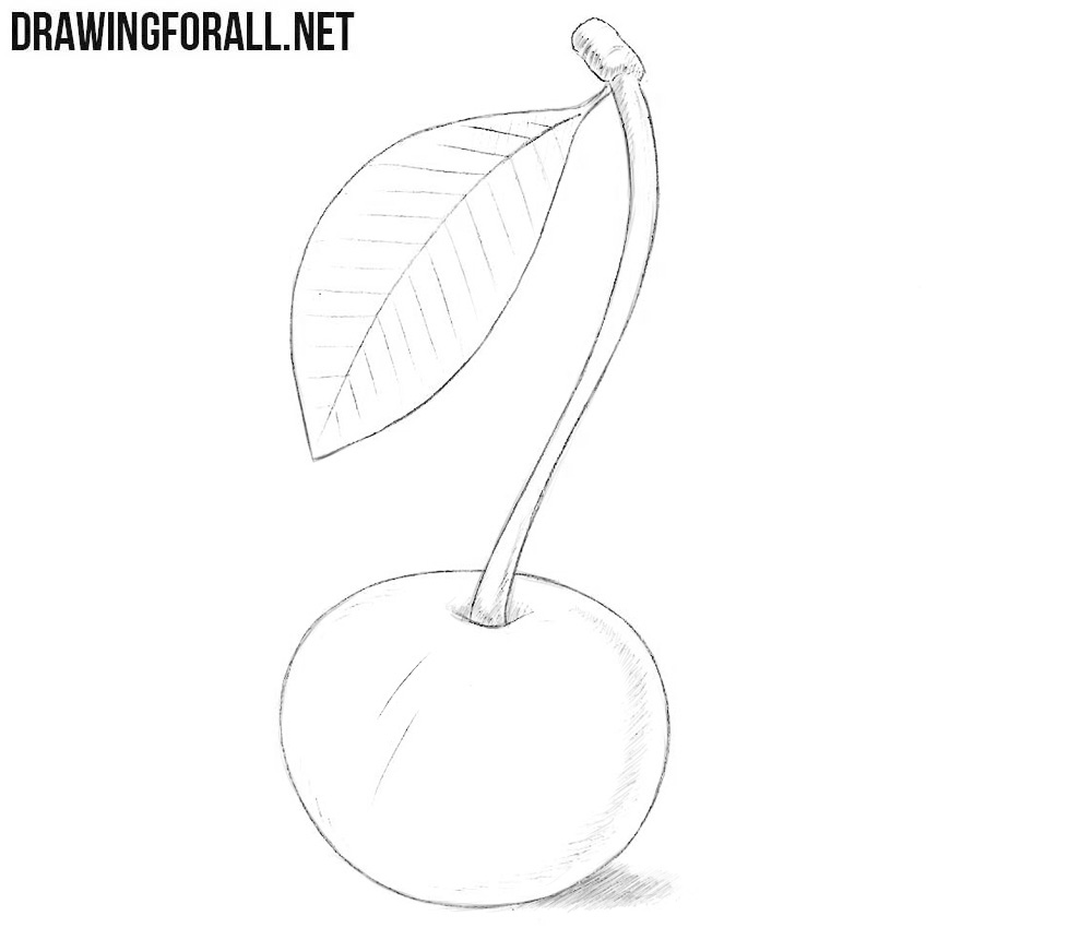 how to draw a cherry how to draw a wild cherry drawingforallnet a to draw cherry how
