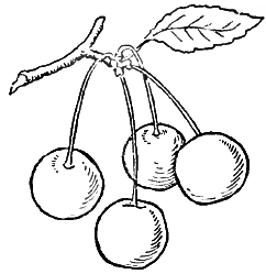 how to draw a cherry how to draw cherries with 2 simple step by step drawing a cherry to draw how