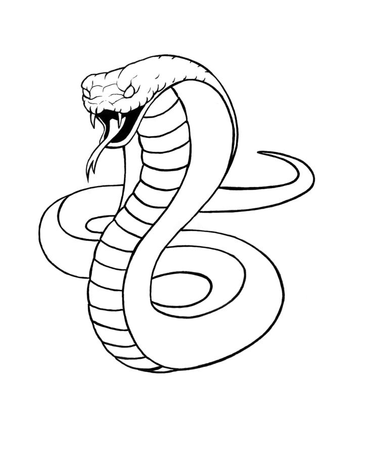 how to draw a cobra king cobra drawing at getdrawings free download to how draw a cobra