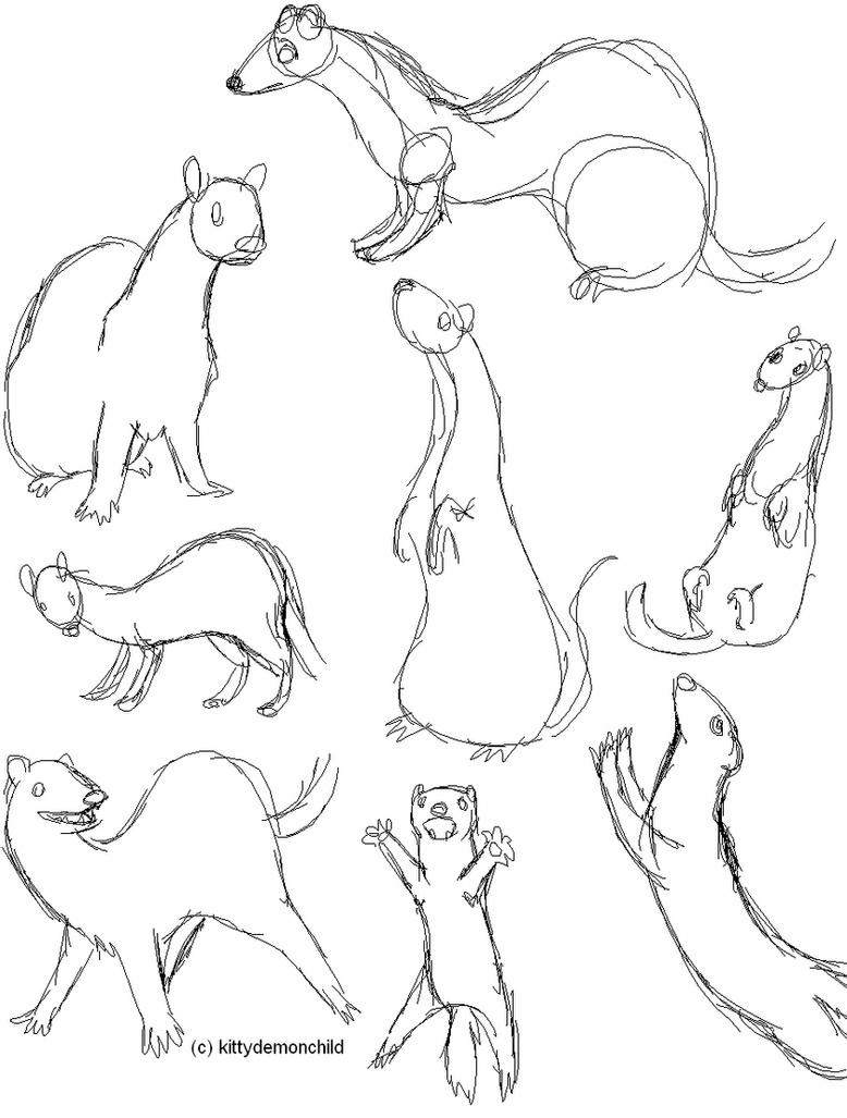 how to draw a ferret 50 best images about ferret characters on pinterest how to ferret draw a