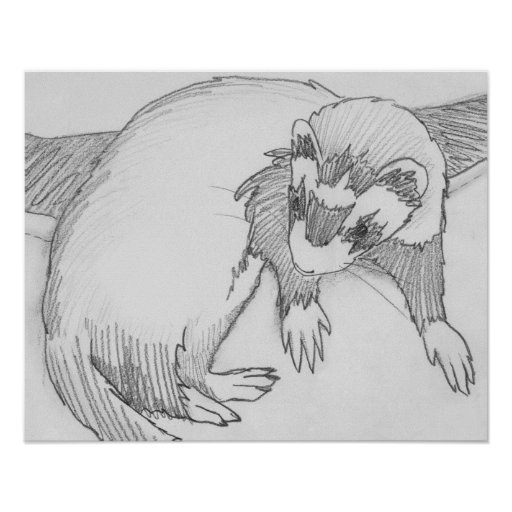 how to draw a ferret cute ferret drawing at getdrawings free download draw how ferret a to