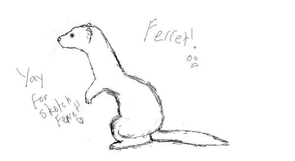how to draw a ferret cute ferret drawing at getdrawings free download how draw ferret to a
