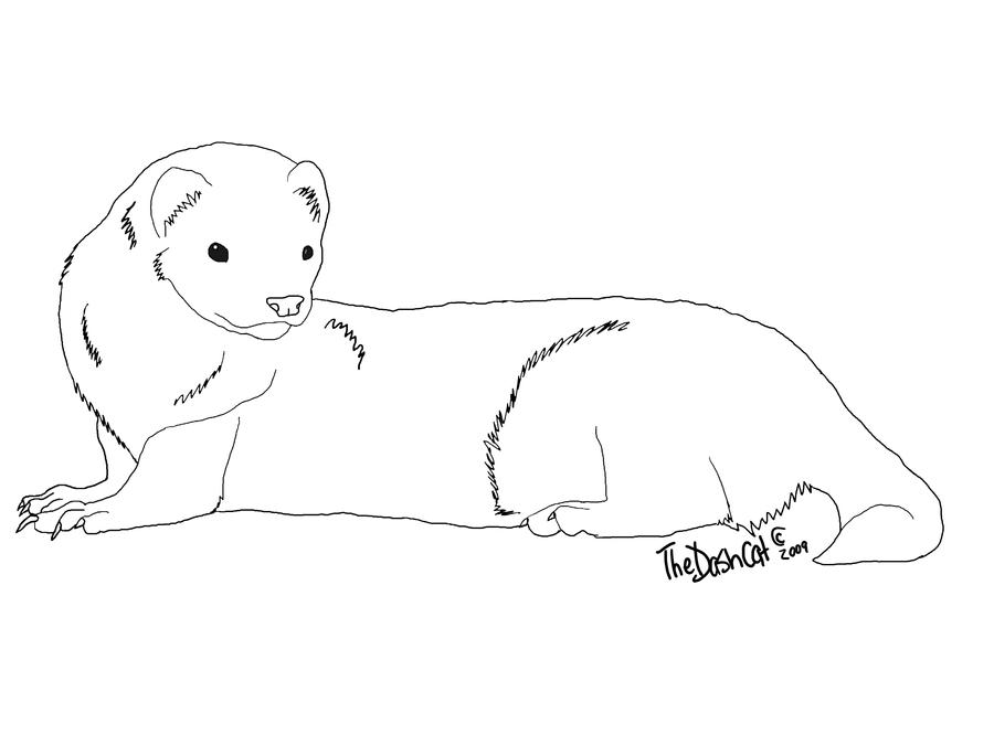 how to draw a ferret decorate with ferret stencils ferrets magazine ferret draw to ferret how a