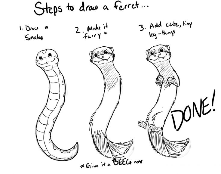 how to draw a ferret how to draw a ferret animal drawings cute ferrets draw how a to ferret