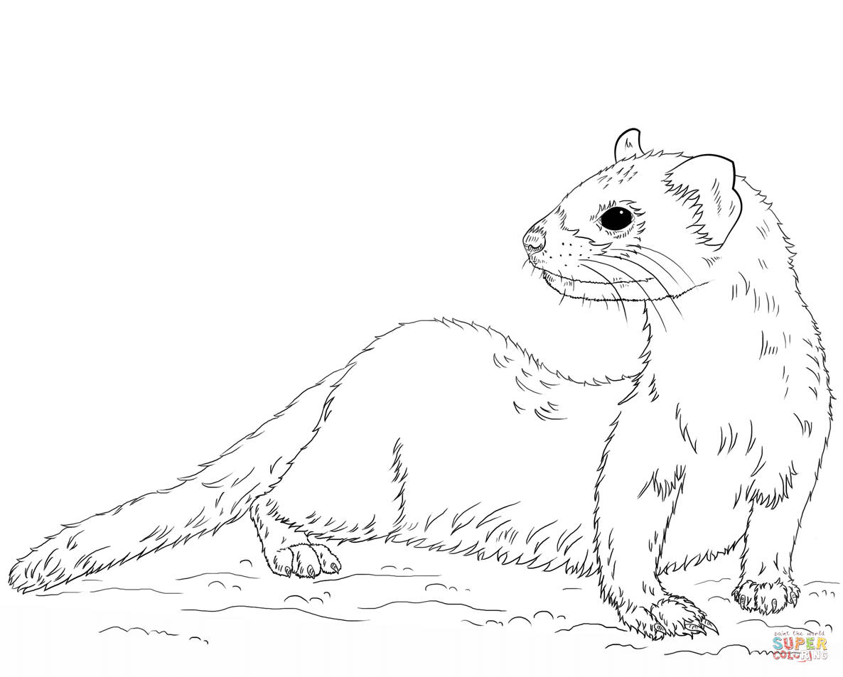 how to draw a ferret how to draw a ferret how draw ferret a to