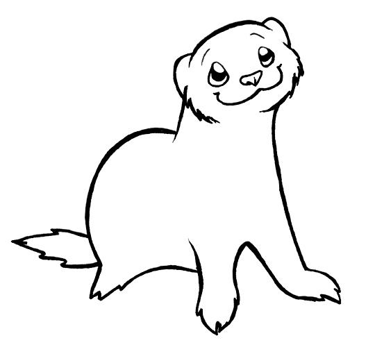 how to draw a ferret illustrated weasel facts for kids cute ferrets animal to how draw ferret a