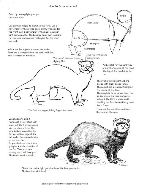 how to draw a ferret rough ferret sketches by kittydemonchild on deviantart to ferret how a draw