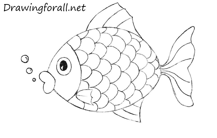 how to draw a fish bluegill fish drawing lesson draw fish how to a