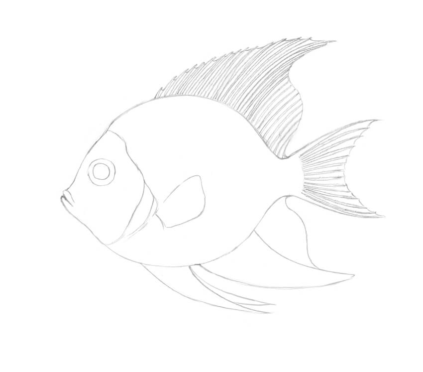 how to draw a fish how to draw a fish step by step how to draw faster a draw to fish how