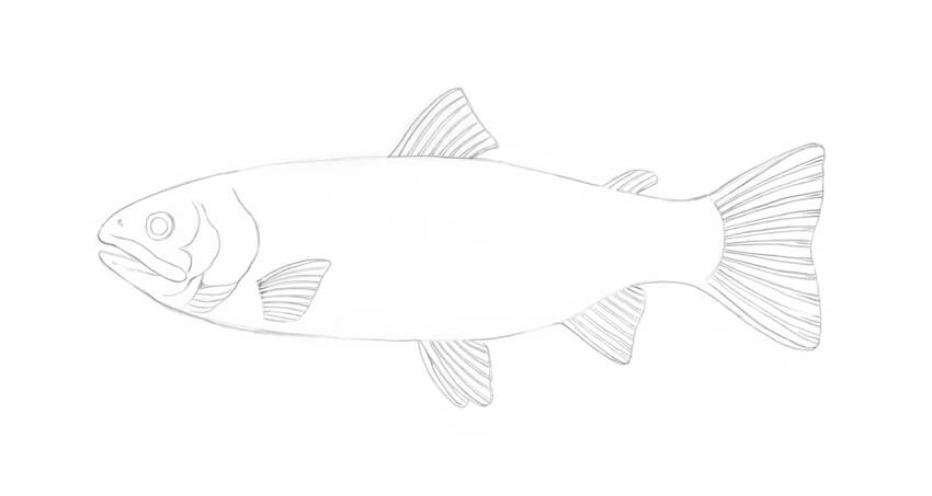 how to draw a fish how to draw a fish using simple shapes let39s draw that how draw fish to a