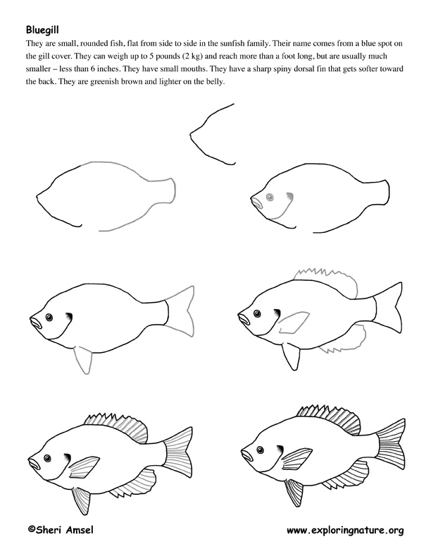 how to draw a fish how to draw a koi fish easy drawing art in 2020 koi to draw fish how a