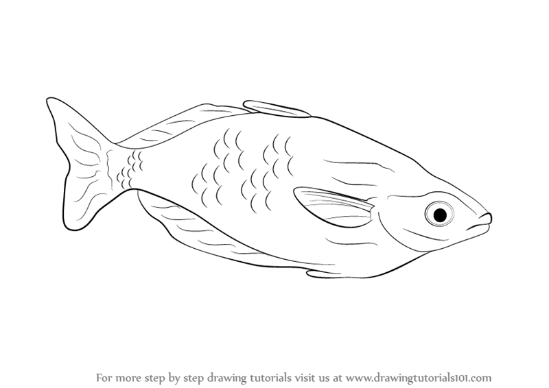 how to draw a fish how to draw fish coloring page to a draw fish how