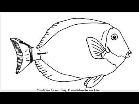 how to draw a fish learn how to draw a cool fish for kids animals for kids fish how draw a to