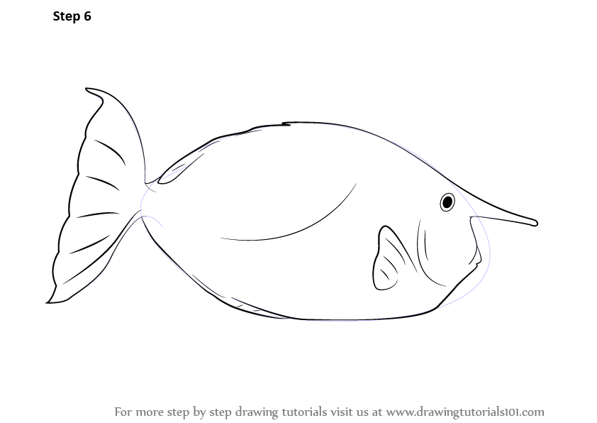 how to draw a fish learn how to draw koi fish with this easy step by step guide how a draw to fish