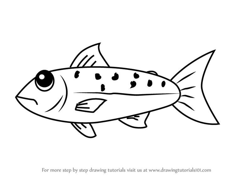 how to draw a fish salmon fish drawing easy how a draw fish to