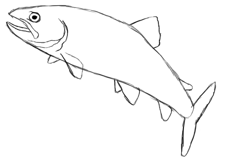 how to draw a fish the best free freshwater drawing images download from 53 fish how a draw to