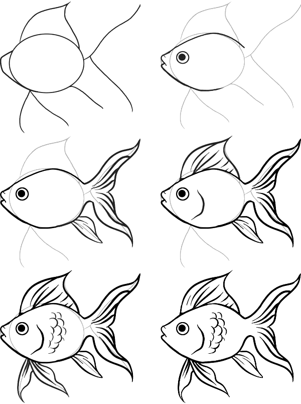 how to draw a fish the zoocrew projects to fish draw a how