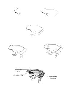 how to draw a frog learn how to draw a frog for kids animals for kids step how frog a draw to