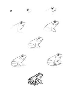 how to draw a frog life cycle of a frog drawing at getdrawings free download a draw frog how to