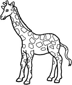 how to draw a giraffe head 9 best images about giraffe on pinterest animal drawings to how head a draw giraffe