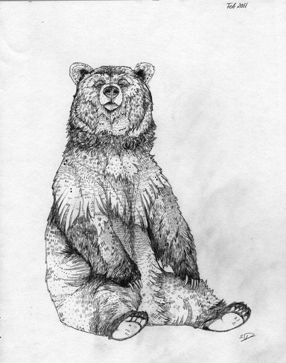 how to draw a grizzly bear face bear drawing bear illustration bear art bear sketch draw grizzly a how bear to face