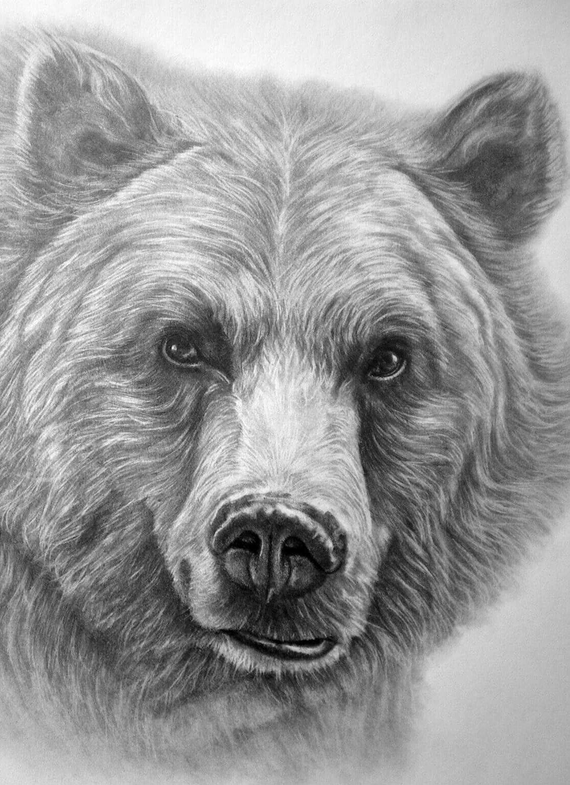 how to draw a grizzly bear face beautiful grizzly bear drawing with images bear bear face grizzly draw how a to
