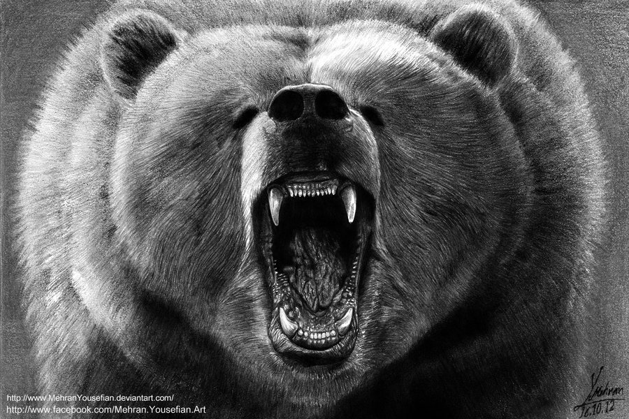 how to draw a grizzly bear face drawn grizzly bear roaring black pencil and in color face grizzly draw how a to bear