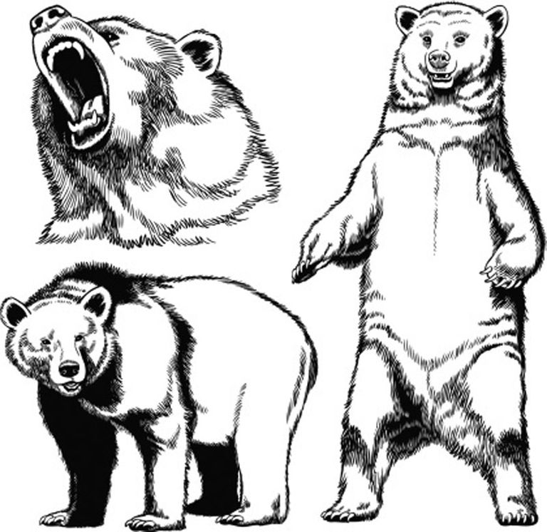 how to draw a grizzly bear face easy drawing ideas step by step a to grizzly how bear face draw