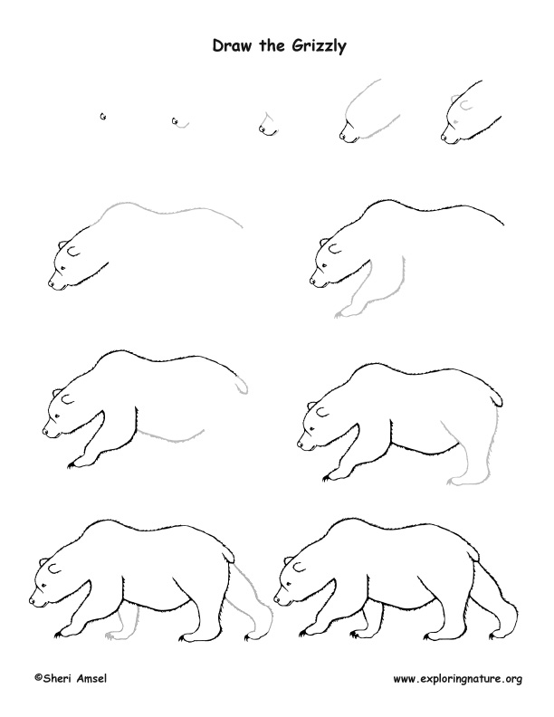 how to draw a grizzly bear face grizzly bear drawing at getdrawings free download how draw face bear to grizzly a