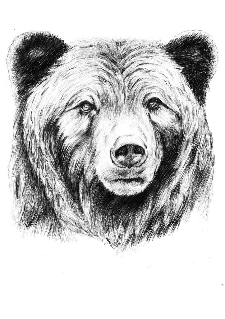 how to draw a grizzly bear face grizzly grizzly bear tattoos bear tattoos bear paintings a grizzly bear face how draw to
