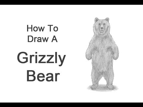 how to draw a grizzly bear face how to draw a grizzly bear youtube how face grizzly bear a to draw
