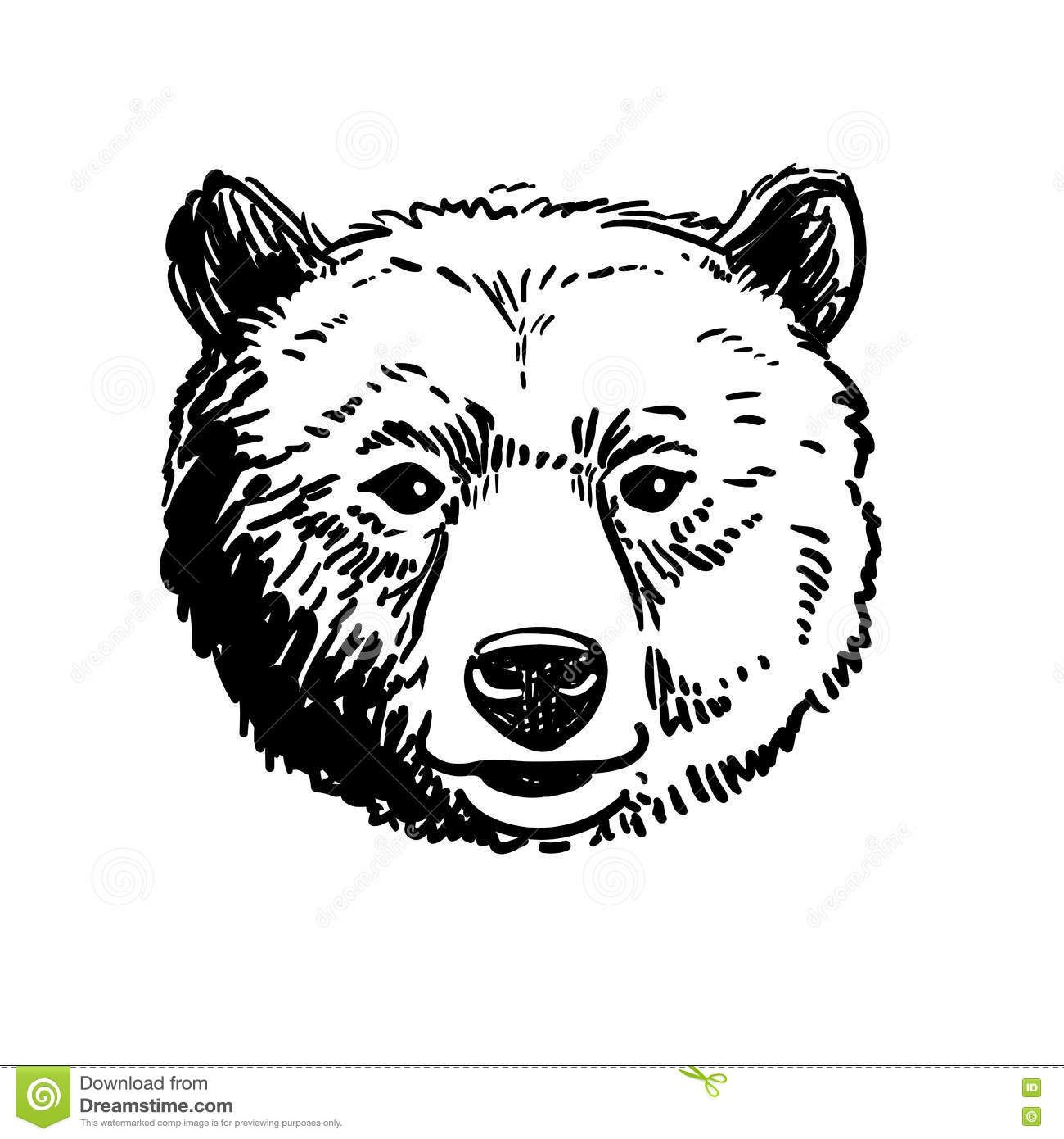 how to draw a grizzly bear face kuvahaun tulos haulle bear head drawing karhu to grizzly face a bear how draw