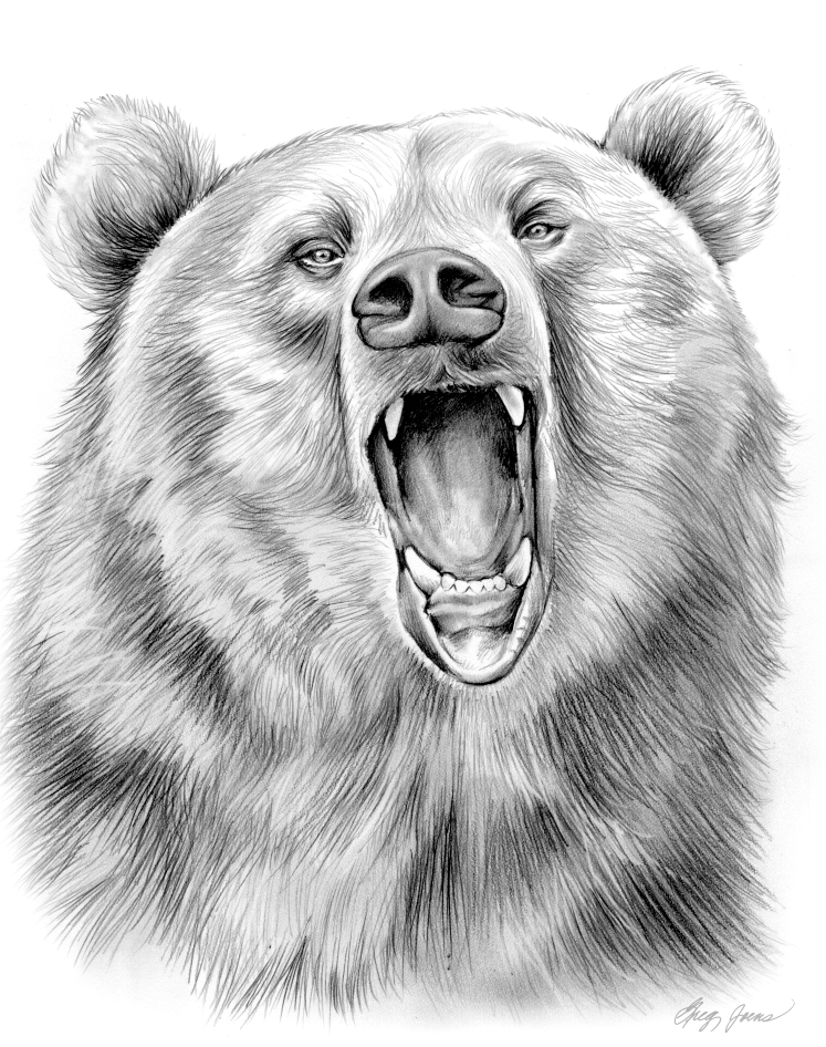 how to draw a grizzly bear face pencil art drawings grizzly bear in graphite pencil by bear to face how a draw grizzly