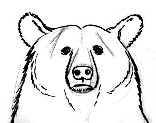 how to draw a grizzly bear face side face grizzly bear coloring pages draw how to bear grizzly face a