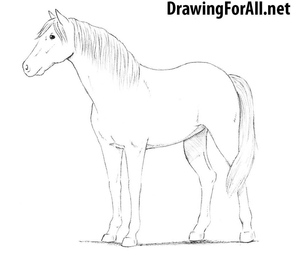 how to draw a horse 33 best images about drawing horses all my life on to horse draw how a