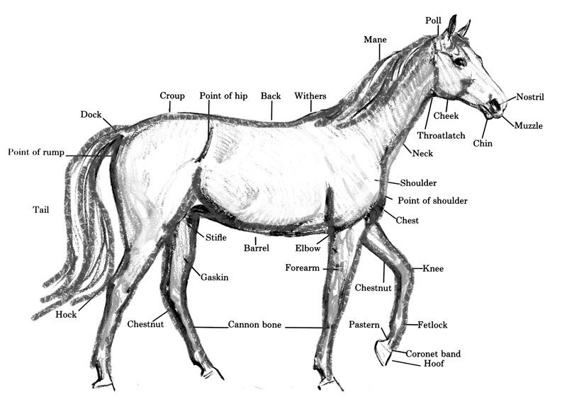 how to draw a horse horse drawing ponies official site best online horse a how to draw
