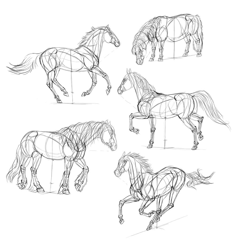 how to draw a horse how to draw a horse to how draw horse a
