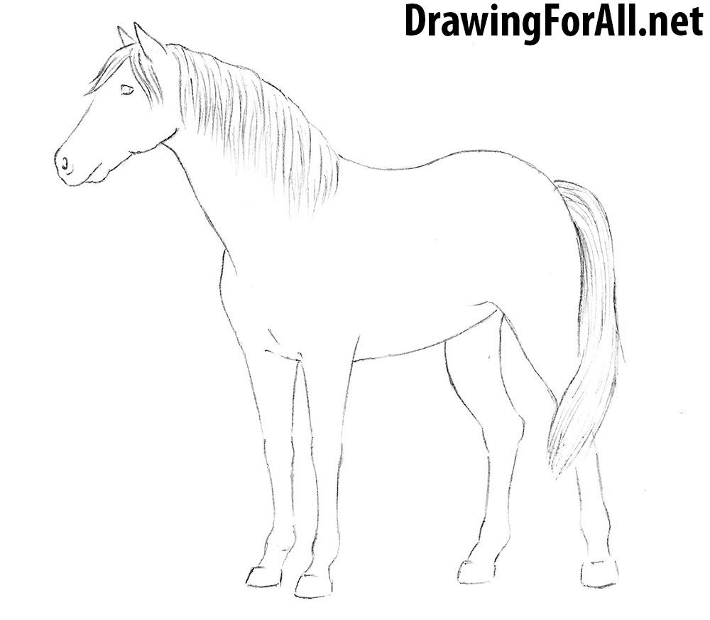 how to draw a horse how to draw horses horse drawings animal drawings horse to how draw a