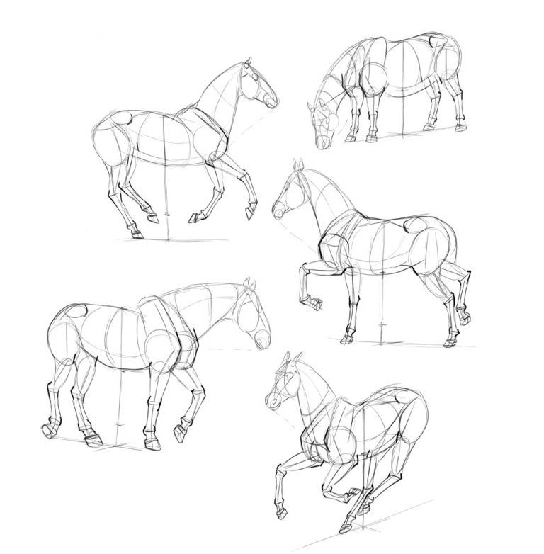 how to draw a horse how to draw the horse 1 eng by elruu on deviantart in draw a to how horse