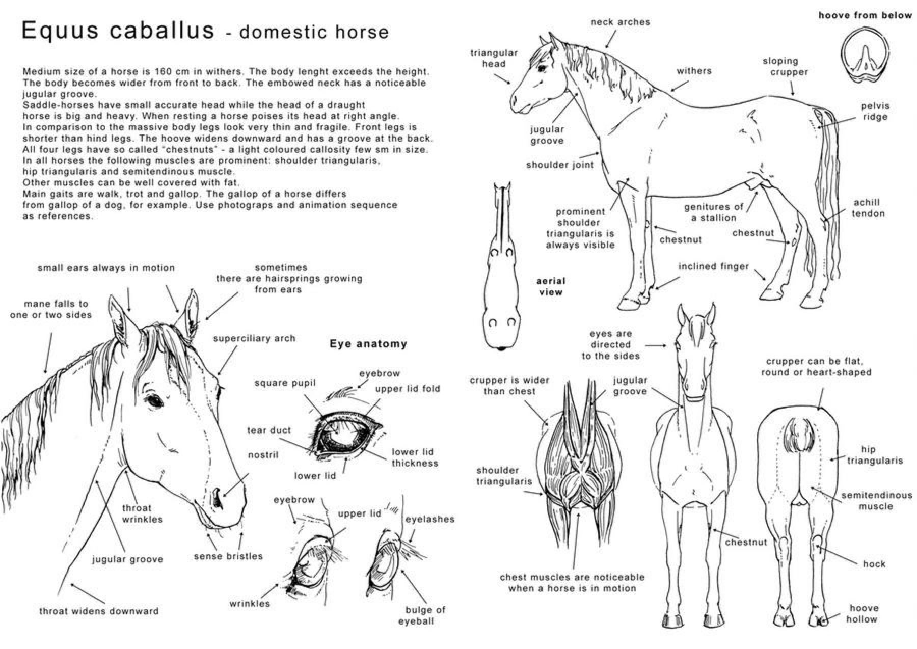 how to draw a horse what are step by step instructions for drawing a horse horse how to a draw