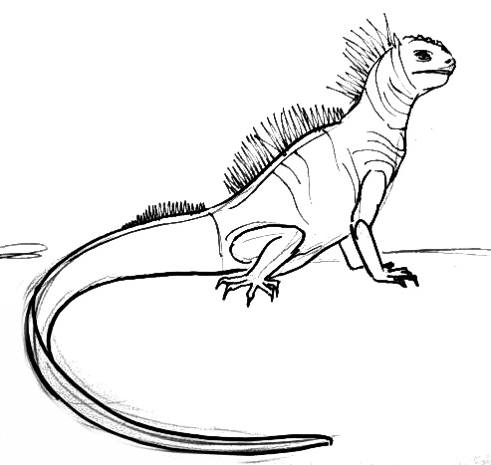 how to draw a iguana ermine coloring coloring pages coloring pages draw iguana to a how
