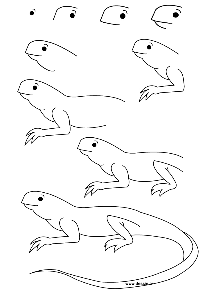 how to draw a iguana reptile drawing amazing wallpapers how draw iguana to a
