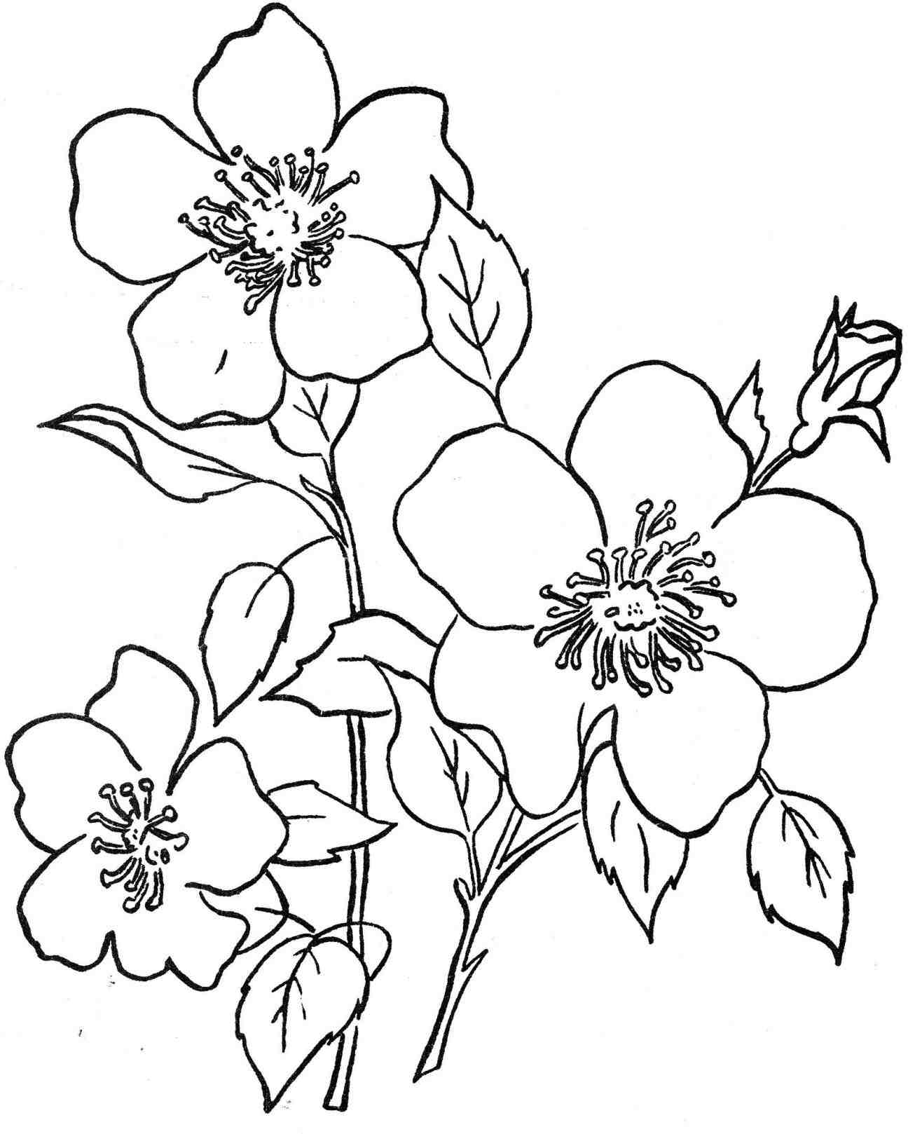 how to draw a lily 5 details and shading how to draw a lily of the valley to draw lily how a