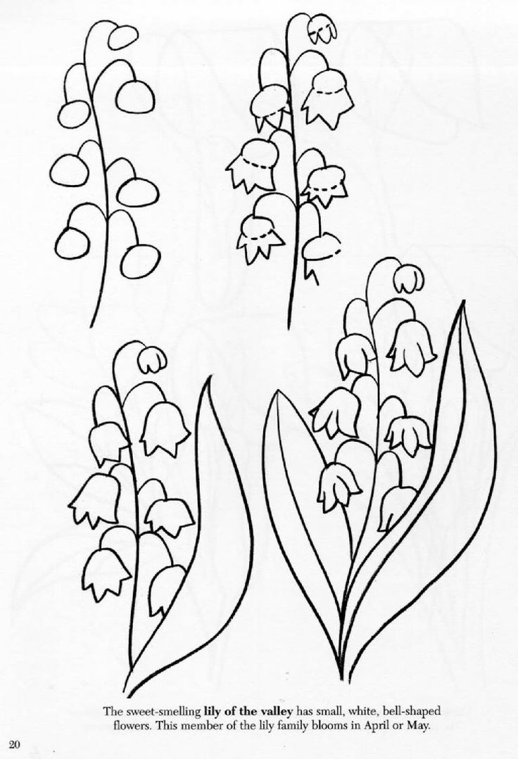 how to draw a lily art class ideas flowers flowers flowers to lily a draw how