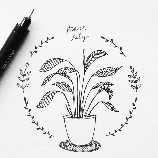 how to draw a lily easter lily drawing how to draw a lily tlc to a lily draw how