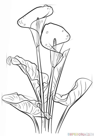 how to draw a lily flower drawing at paintingvalleycom explore collection a to how draw lily