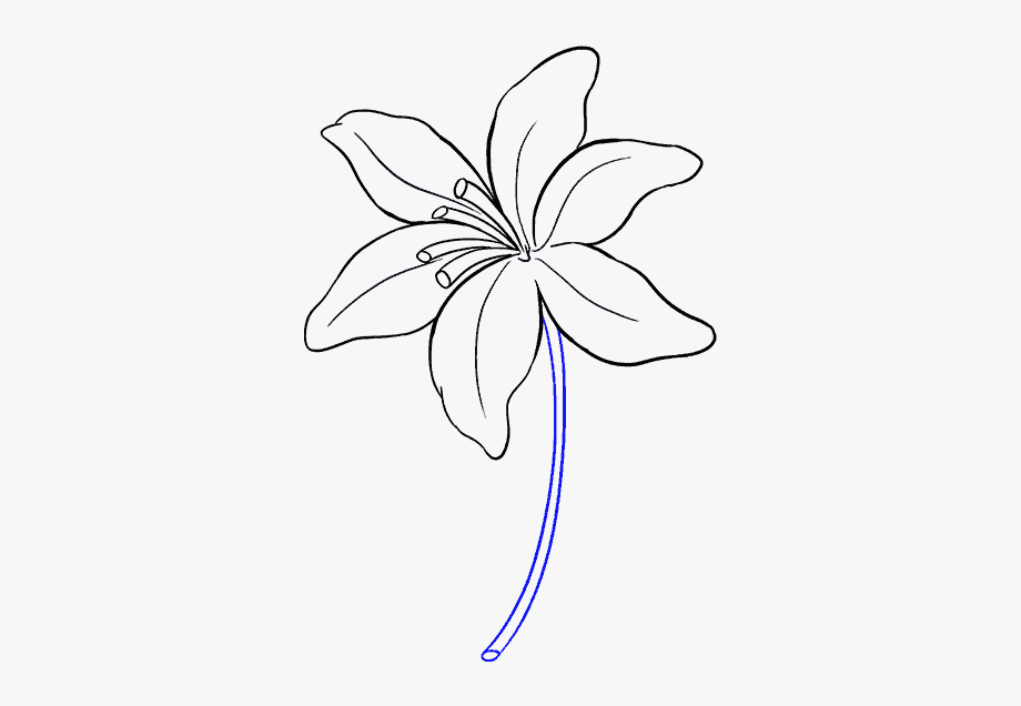 how to draw a lily how to draw a lily flower drawing tutorials flower how lily to a draw